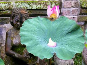 plac lotos